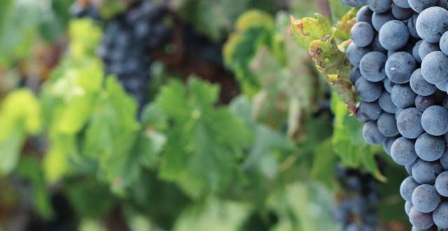 2_vitivinicolo2-1