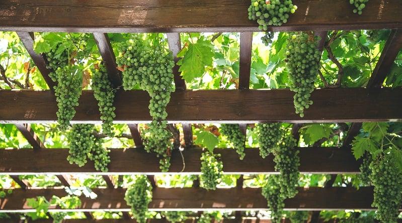 TeamSystem Wine & Oil per il mondo Vitivinicolo Cooperativo